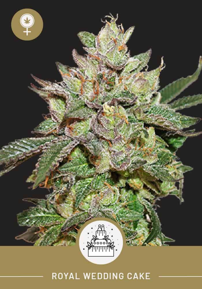 Royal Wedding Cake – Feminized