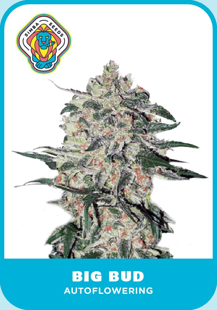 Simba Seeds Big Bud – Autoflower
