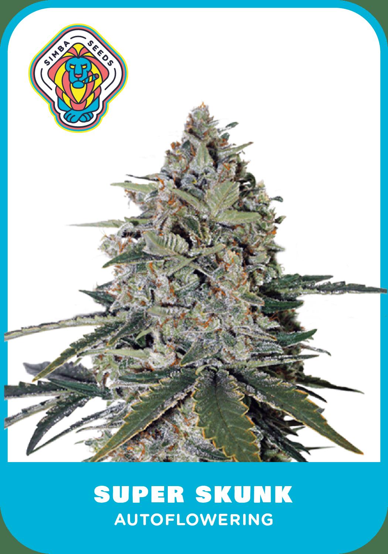 Simba Seeds Super Skunk – Autoflower