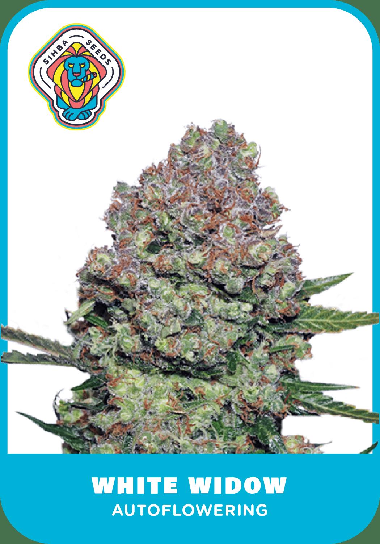 Simba Seeds White Widow – Autoflower